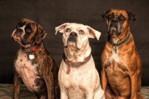 dogs representing duplicate records